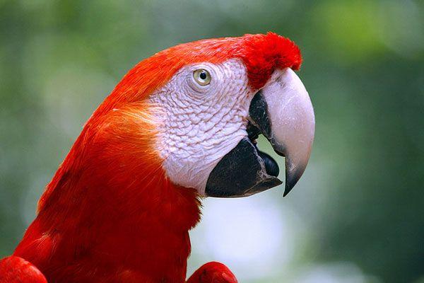 polly beak